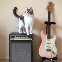 猫専用ギターアンプ型爪とぎがロック これならバリバリされても…