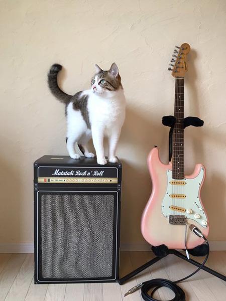 猫専用ギターアンプ型爪とぎがロック これならバリバリされても大丈夫!