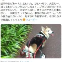 病気で歩行器を使っている犬はかわいそう?「今」を生きるコー…