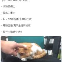 消防設備会社に入って習得した技能「指一本猫眠らせ士」で猫が…