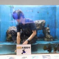 桂浜水族館がイケメンを展示? まさかの投稿にネットざわつく