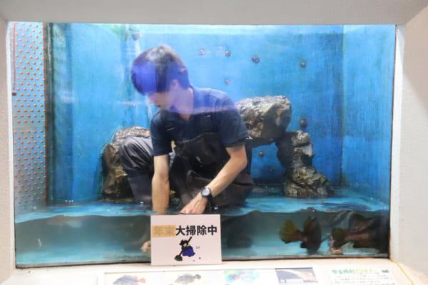 スタッフ 桂浜 水族館