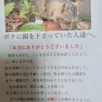 地域猫をお世話してくれた人への感謝のお手紙 その…