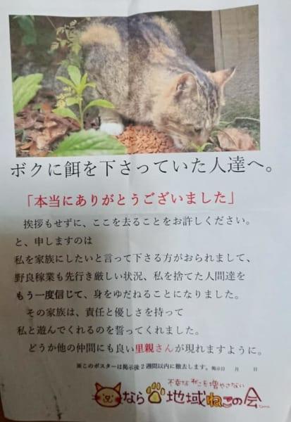 地域猫をお世話してくれた人への感謝のお手紙 その後のお返事に心温まる
