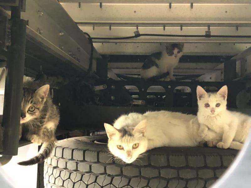 子猫可愛い!と思ったら……トラックの下で猫一家が団らん中!?