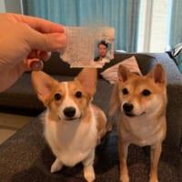 """容疑者はワンちゃん?悪質な事""""犬""""が発生"""