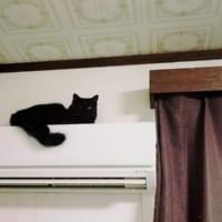 筋肉ムキムキの猫を発見?進撃のニャンコがエアコンから登場