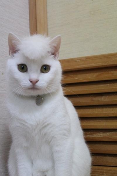 令和のなめ猫?ネコ界の氣志團?リーゼント姿のニャンコが話題