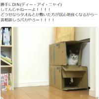 サンシャイン池崎が愛猫に「DIN」されたと叫んでいるツイート…