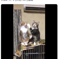 猫漫才?素早すぎるツッコミにネット民「これがあの…