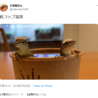 い~い湯~だ~な カナヘビたちのお風呂姿が可愛す…