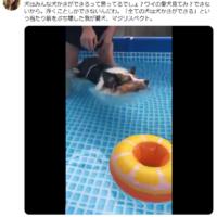全ての犬が「犬かき」をできる訳ではなかった 泳げない犬だっ…