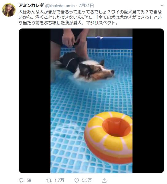 全ての犬が「犬かき」をできる訳ではなかった 泳げない犬だっているんです!