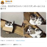 段ボール箱にみっちりしている猫が可愛すぎ 「まだ…