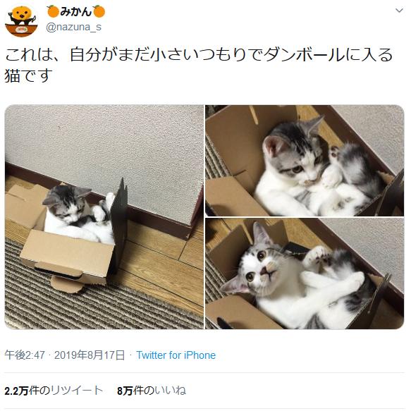 段ボール箱にみっちりしている猫が可愛すぎ 「まだ入れるにゃ」