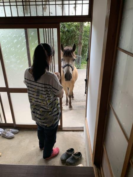 玄関開けたら馬がいた!神社の御神馬が割とフリーダムで愛されキャラ
