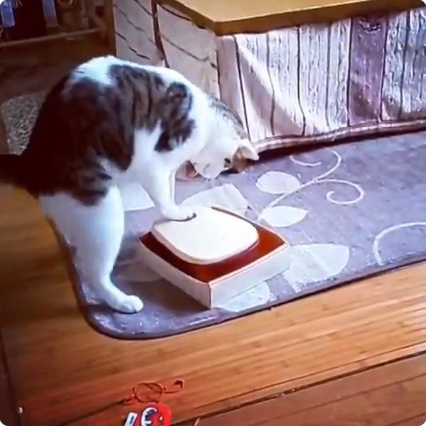 6年の研究成果!自動給餌器をくるくるぱっかーんと開ける猫さん現る