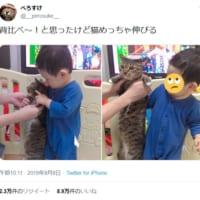 猫と1歳児の背比べ 意外と伸びて子どももビックリ!