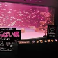 生命の根源に迫る!サンシャイン水族館で「性いっぱい展」夜間限…