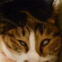 白目をむいて爆睡中の猫 壮絶寝顔に笑いをこらえきれない人続々
