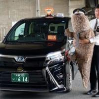 京都の街を走るMKタクシーに超特大オオサンショウウオのぬいぐ…