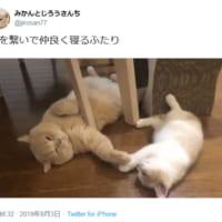 兄弟で仲良く手をつないで眠る猫たち……平和ってこういう事な…