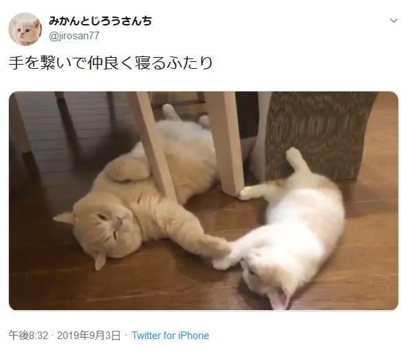兄弟で仲良く手をつないで眠る猫たち……平和ってこういう事なのかな