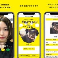 保護猫に出会えるマッチングアプリ「NYAPPLING」 殺処…