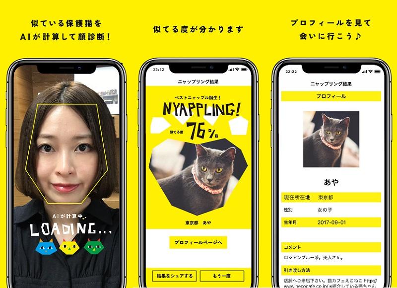 保護猫に出会えるマッチングアプリ「NYAPPLING」 殺処分問題きっかけで誕生