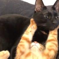 黒猫兄さんが好きすぎて……お顔をむぎゅっとホールド
