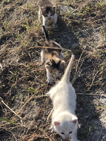 3匹の子猫が恩返し!? 子猫を保護したらまさかの幸運
