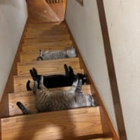 猫たちによる集団嫌がらせ? 階段に猫トラップ発生…
