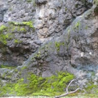 ニホンカモシカを探せ!上野動物園が出題したクイズが難しすぎる