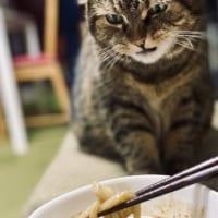 心が表情にあらわれすぎな猫 ちゅ~るかな?→魚介系つけ麺の…