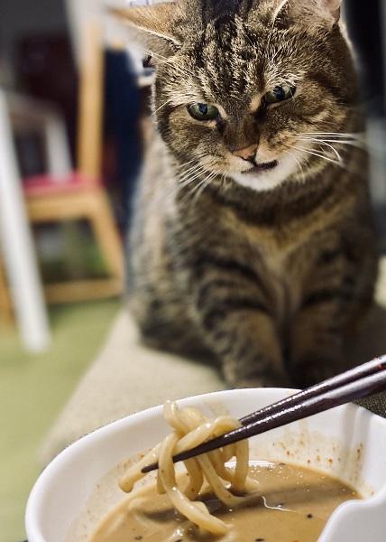 心が表情にあらわれすぎな猫 ちゅ~るかな?→魚介系つけ麺の匂いでした→チッ