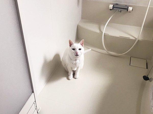 お風呂場に現れる「猫妖怪・ふろみたがり」 各家庭にも出没の恐怖(?)