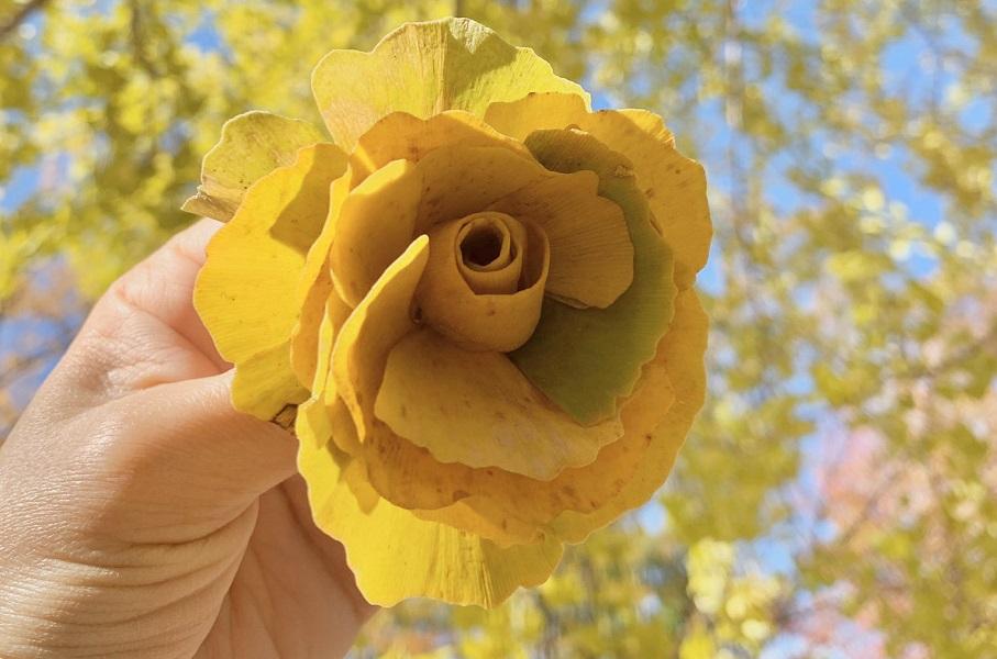 イチョウの落ち葉が黄色いバラの花に 落ち葉アートに「懐かしい」の声も