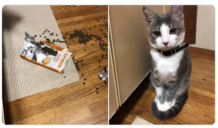 あなたしかいないでしょ…いたずらに「何もしてませんけど?」顔ですっとぼける猫ちゃん