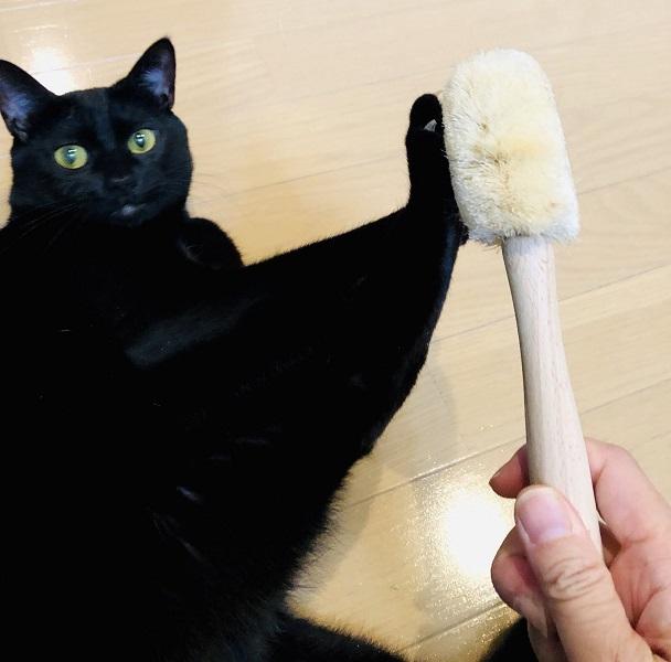 ブラッシング大嫌いな黒猫ちゃん 「全力で拒否します」な表情が凛として……