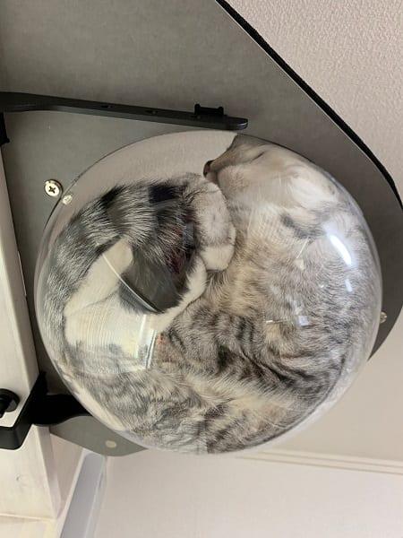 透明ハンモックの中の猫ってこうなってるのか 下から見た姿は「やはり液体?」