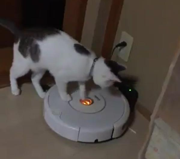 お腹がすいたらルンバを起動?賢すぎる猫