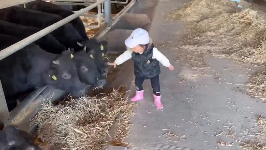 牛さんのお世話をする1歳児 一心不乱に頑張る姿に「ずっと見ていたい」