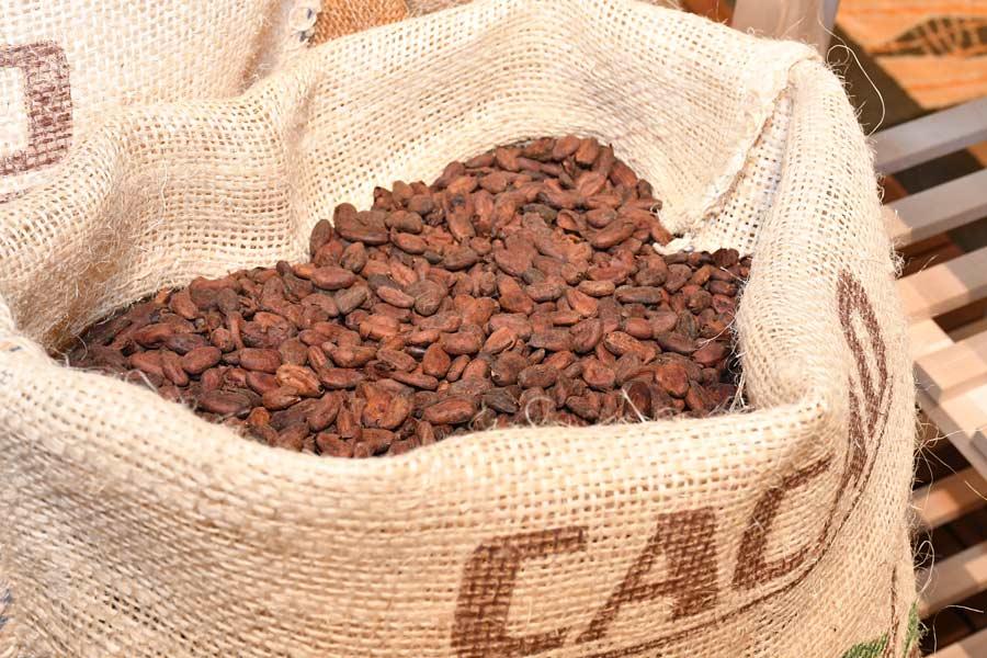 チョコレートに秘められた健康効果を知る 明治チョコレートフォーラム
