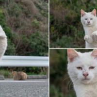 """さとりをひらいた猫? """"ねこ拳""""中の虚無の表情に…"""