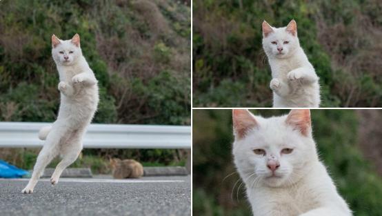 """さとりをひらいた猫? """"ねこ拳""""中の虚無の表情に「仙人か」"""