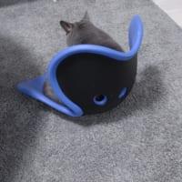 もしかして猫背を直したい?姿勢を直すサポートチェアに座り続…