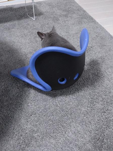 もしかして猫背を直したい?姿勢を直すサポートチェアに座り続けるニャンコ