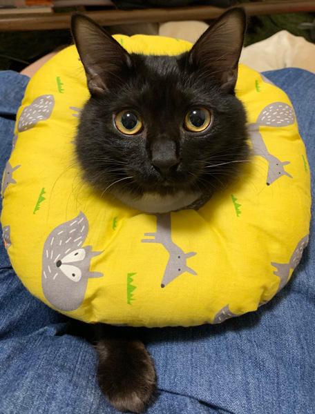 動物自身から患部を守るエリザベスカラー ふわふわもこもこなアイテムに注目あつまる