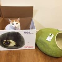 プレゼントよりも箱を気に入る「猫あるある」 わかっていたけ…