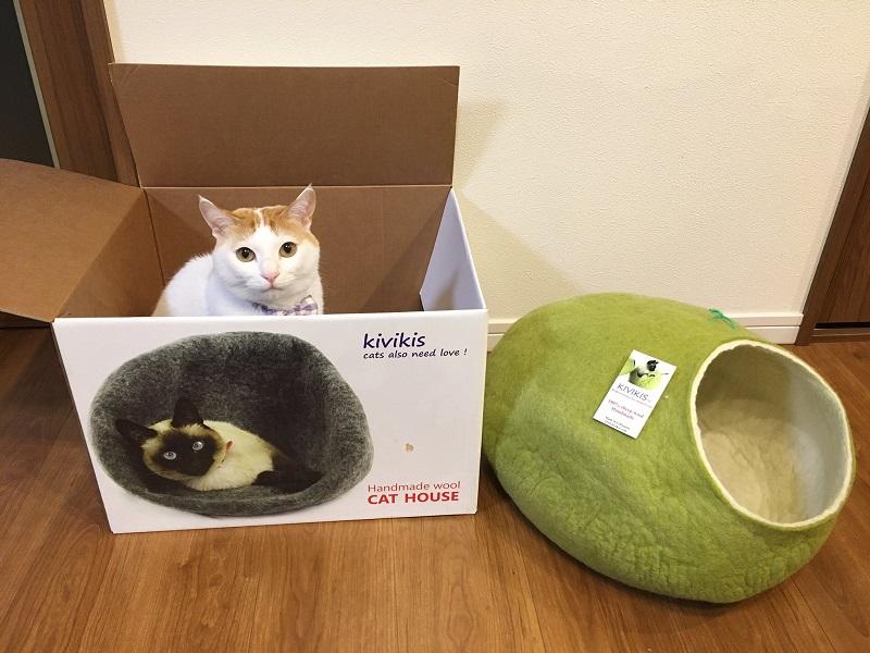 プレゼントよりも箱を気に入る「猫あるある」 わかっていたけど「逆!逆!」とツッコミたくなるよね